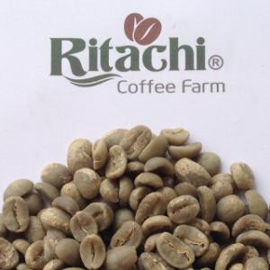 Arabica Dalat Vietnam full wash screen 18 from Ritachi Coffee Farm