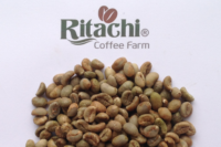 Fine Robusta Viet Nam Screen 16 from Ritachi Coffee Farm