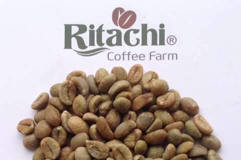 Fine Robusta Viet Nam Screen 18 from Ritachi Coffee Farm